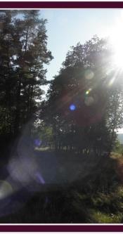Sonnenstrahlen_Wald