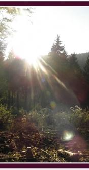 Sonnenstrahlen_Wald_01