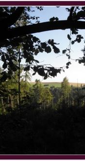 Spazieren_Urlaub_Wald