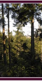 Urlaub_Wald_Mosel