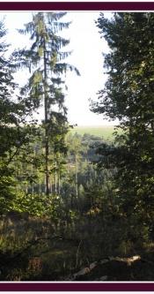 Wald_Mosel
