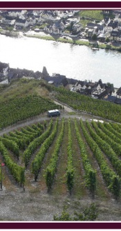 Weinberge_Mosel_Zell